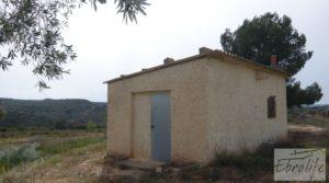 Olivar con masía rústica en Maella. a buen precio con olivar