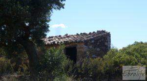 Olivar con masía típica en Maella ♘☼❀☺