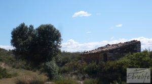 Olivar con masía típica en Maella ♘☼❀☺ a buen precio por 19.000€