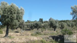 Detalle de Olivar con masía típica en Maella ♘☼❀☺ por 19.000€