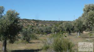 Detalle de Olivar con masía típica en Maella ♘☼❀☺