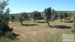 Se vende Olivar con masía típica en Maella ♘☼❀☺