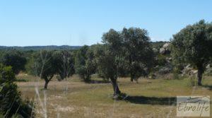 Foto de Olivar con masía típica en Maella ♘☼❀☺ en venta