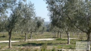 Espectacular finca de 12 hectáreas en Caspe. en oferta con regadío por 245.000€