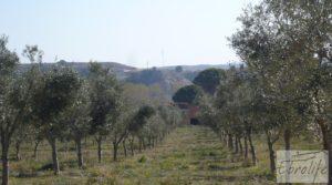 Detalle de Espectacular finca de 12 hectáreas en Caspe. con regadío por 245.000€