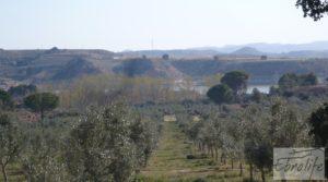 Vendemos Espectacular finca de 12 hectáreas en Caspe. con regadío por 245.000€