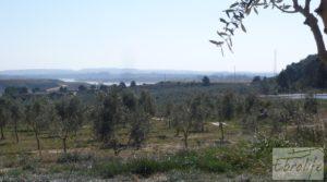 Espectacular finca de 12 hectáreas en Caspe. en venta con regadío