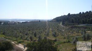 Espectacular finca de 12 hectáreas en Caspe. a buen precio con regadío