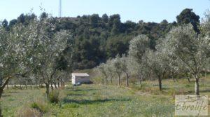 Se vende Espectacular finca de 12 hectáreas en Caspe. con regadío