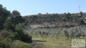 Vendemos Espectacular finca de 12 hectáreas en Caspe. con regadío