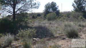 Se vende Espectacular finca de 12 hectáreas en Caspe. con regadío por 245.000€