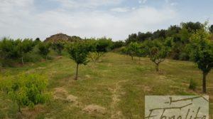 Foto de Finca de arboles frutales y olivos en Maella en venta con piscina por 49.900€