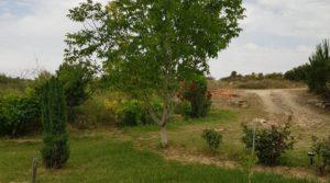 Finca de arboles frutales y olivos en Maella para vender con piscina