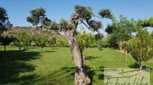 Detalle de Finca de arboles frutales y olivos en Maella con piscina por 49.900€