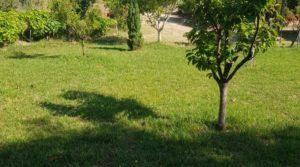 Vendemos Finca de arboles frutales y olivos en Maella con piscina