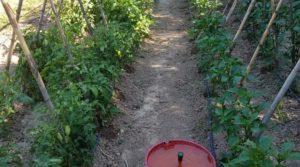 Finca de arboles frutales y olivos en Maella en venta con piscina