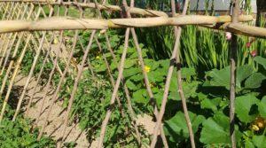 Finca de arboles frutales y olivos en Maella en oferta con piscina