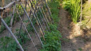 Se vende Finca de arboles frutales y olivos en Maella con piscina por 49.900€