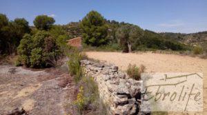 Se vende Finca de olivos autóctonos en Calaceite con privacidad