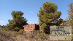Finca de olivos autóctonos en Calaceite a buen precio con tranquilidad