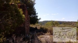 Foto de Finca de olivos autóctonos en Calaceite en venta con tranquilidad