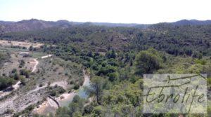 Finca de olivos autóctonos en Calaceite para vender con privacidad
