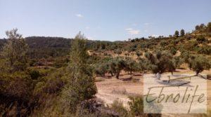 Foto de Finca de olivos autóctonos en Calaceite con tranquilidad por 35.000€
