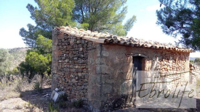 Finca de olivos autóctonos en Calaceite