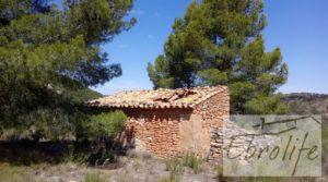 Vendemos Finca de olivos autóctonos en Calaceite con privacidad