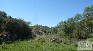 Se vende Finca rodeada de bosques en Batea con regadío por 70.000€