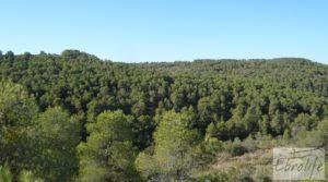Finca rodeada de bosques en Batea en oferta con regadío