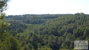 Finca rodeada de bosques en Batea en oferta con regadío por 70.000€