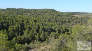 Finca rodeada de bosques en Batea en venta con regadío