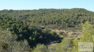 Finca rodeada de bosques en Batea a buen precio con regadío