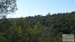 Foto de Finca rodeada de bosques en Batea con regadío