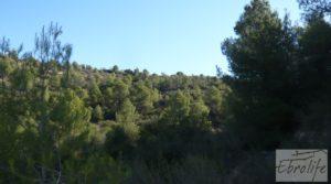 Vendemos Finca rodeada de bosques en Batea con regadío