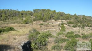 Finca rodeada de bosques en Batea a buen precio con regadío por 70.000€