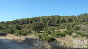 Vendemos Finca rodeada de bosques en Batea con regadío por 70.000€