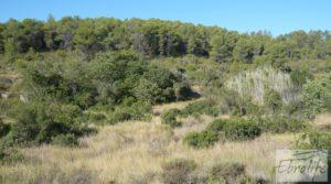 Foto de Finca rodeada de bosques en Batea en venta con regadío