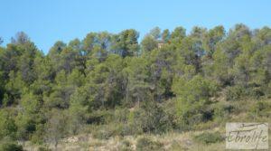 Finca rodeada de bosques en Batea para vender con regadío por 70.000€
