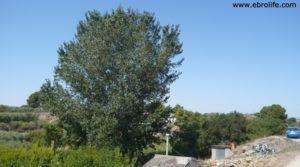 Se vende Masicos en Caspe con agua por 24.000€