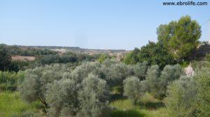 Foto de Torre en la Zaragozeta Caspe en venta con olivos