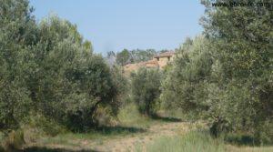 Torre en la Zaragozeta Caspe a buen precio con olivos por 120.000€