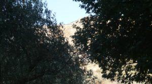 Torre en la Zaragozeta Caspe a buen precio con electricidad