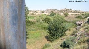 Torre en la Zaragozeta Caspe en oferta con cereales por 120.000€