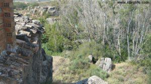 Torre en la Zaragozeta Caspe en venta con olivos por 120.000€