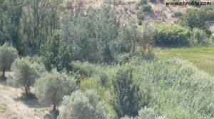 Se vende Torre en la Zaragozeta Caspe con olivos por 120.000€