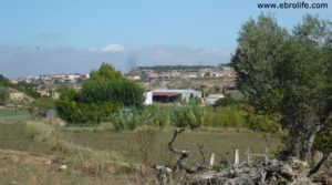 Torre en la huerta de Caspe a buen precio con almacén por 38.000€