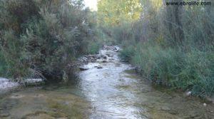 Foto de Masico en el rio Matarraña Mazaleón con olivos por 25.000€