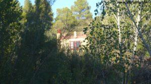 Detalle de Masico en el rio Matarraña Mazaleón con frutales